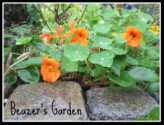 garden-4-4.jpg